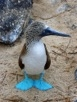 Cool Photo: Blue-Footed Booby